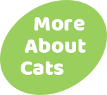 Button - More About Cats