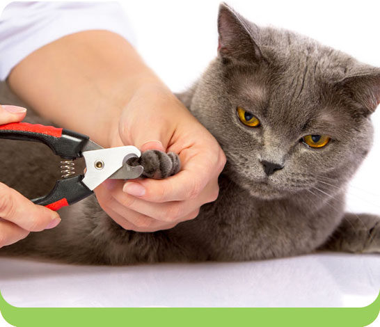 Cat getting its claws clipped