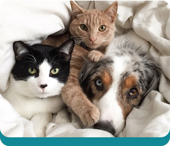 Cats and dogs friends cuddling