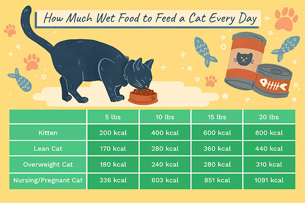 How to feed your cat - Cat feeding chart based on age and weight